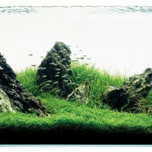 Aquariums et bacs