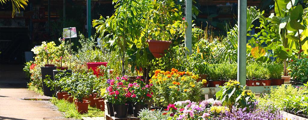 Espace végétal