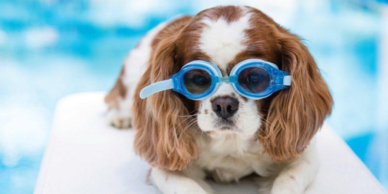 Vacances avec votre animal de compagnie