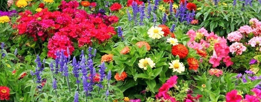 La couleur au jardin