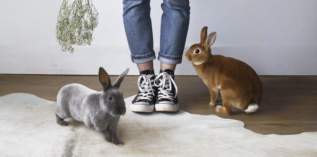 Mettre en confiance son lapin