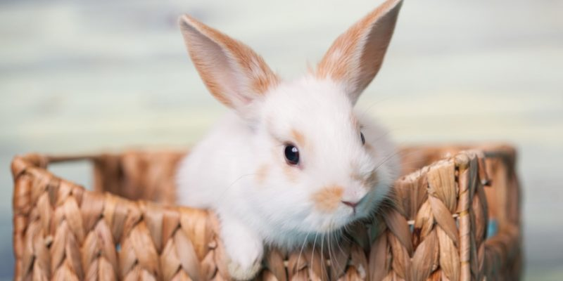 Hygiène du lapin