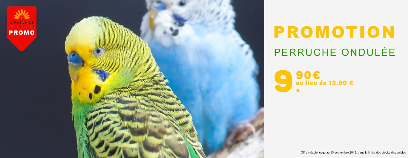 Promotion perruche ondulée