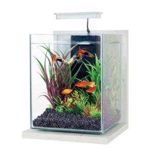 Kit Aquarium Jalaya