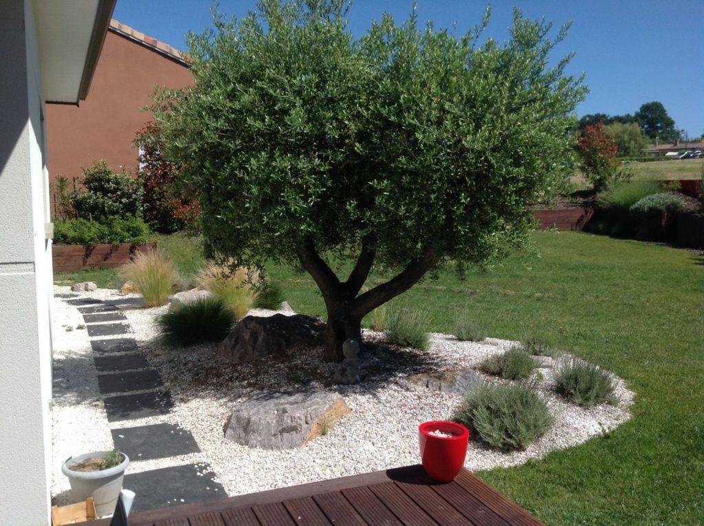 L'olivier, symbole de la Méditerranée