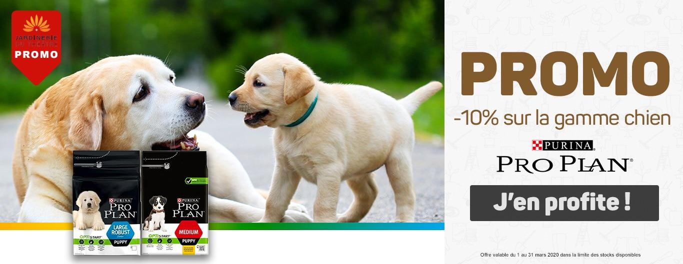 Promotion Pro Plan chien