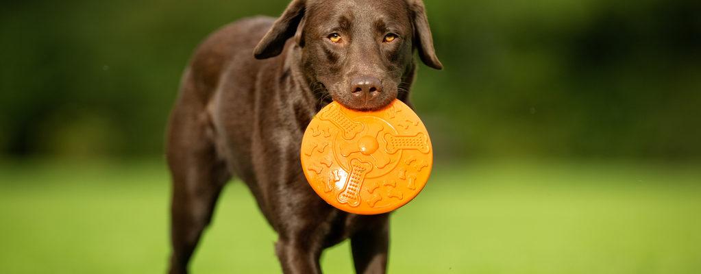 Jeux et jouer avec votre chien