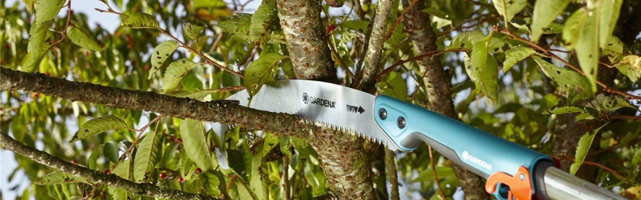 Comment entretenir arbres et arbustes