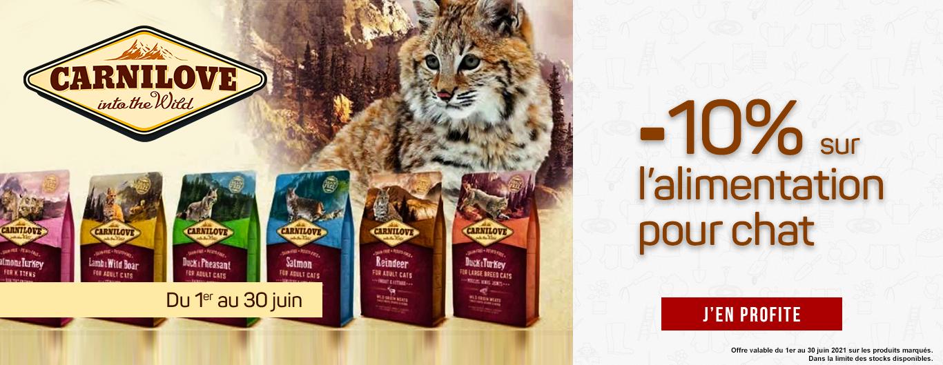 -10 sur l'alimentation chat